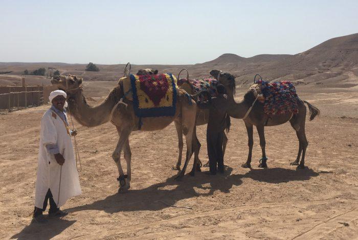 Marrakech / Wüste / Incentive / Kamelreiten